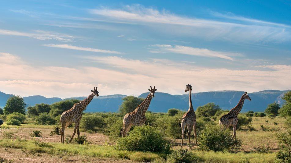 Kruger National Park - Limpopo