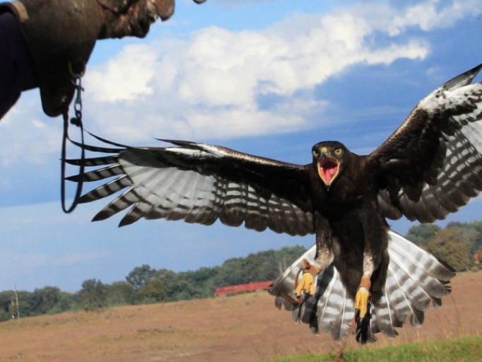 The Dullstroom Bird of Prey and Rehabilitation Center - Mpumalanga